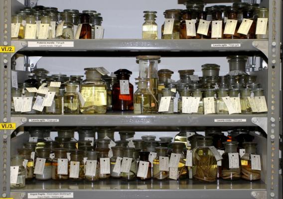Tárolási mód a folyadékos gyűjteményi raktárrészben. Fotó: Barta Zoltán