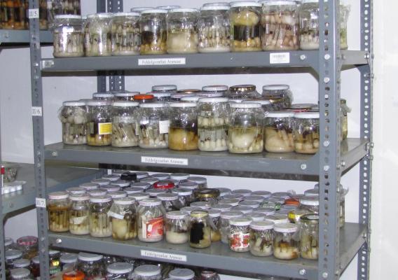 Folyadékos ízeltlábú gyűjtemény